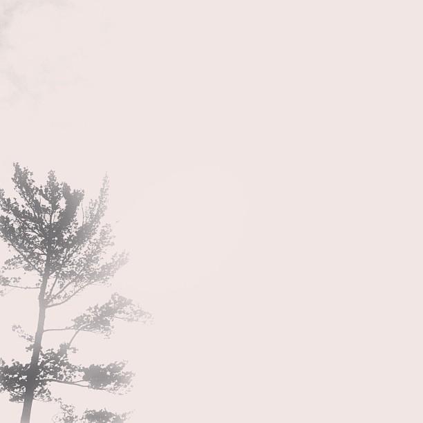 fadedtree